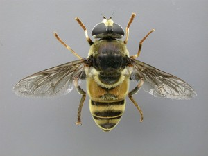 InsectDigitalPhotographyWorkStation2