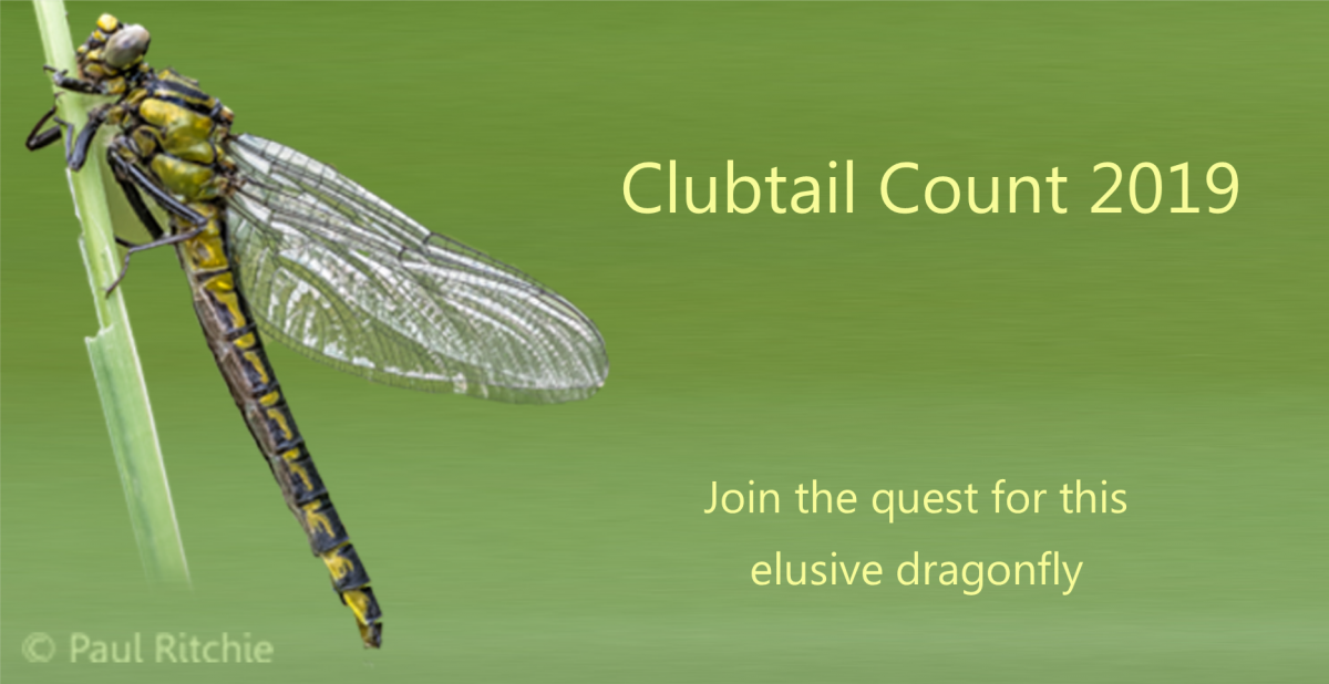 clubtail count 2019
